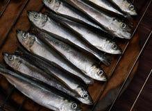 Baltic herring royalty free stock photos