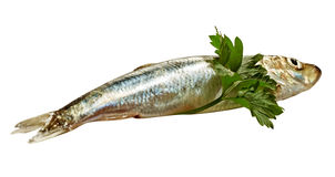 Baltic herring. Stock Photos