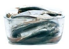 Baltic herring on white background Royalty Free Stock Photos