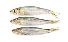 Baltic herrings. Royalty Free Stock Images