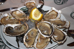 Baltic oysters with lemon. Restaurant in Brussels. Stock Photos