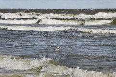 Baltic sea. Royalty Free Stock Images