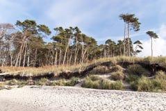 Baltic Sea Beach. In Ahrenshoop, Germany royalty free stock photos