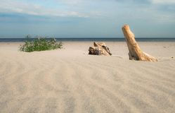 Baltic sea beach with dry wood. Stock Image