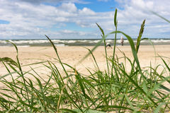 Baltic Sea beach with green grass Stock Photos