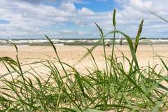 Baltic Sea beach with green grass. Beach with yellow sand at the Baltic Sea. Baltic Sea beach with green grass Stock Photos