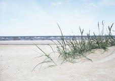 Baltic sea beach Stock Photos