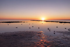 Baltic sea beach with seagulls in sunset Stock Photography