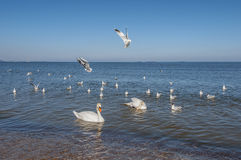 Baltic Sea at beautiful landscape, Segul Stock Images