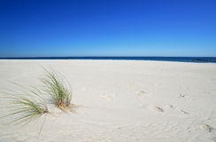 Baltic sea. Beautiful quiet beach on the Baltic Sea Royalty Free Stock Images