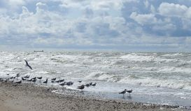 Baltic sea, seagulls  and beautiful cloudy sky, Lithuania Royalty Free Stock Photos