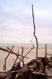 Baltic Sea coast of Darss. In Germany Royalty Free Stock Image