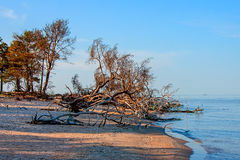 Baltic Sea coast. Kolka. Cape Kolka where two sea meet in the middle Royalty Free Stock Photography