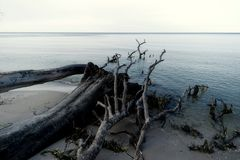Baltic Sea Coast near Ahrenshoop Stock Photo