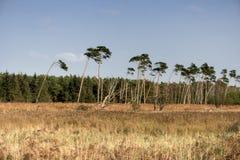 Baltic Sea Coast near Ahrenshoop Stock Image
