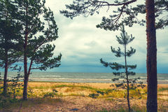 Baltic sea coast Stock Photography