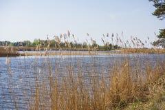 Baltic sea coast. Sunny summer day. Latvia. River called Gauja stock photography