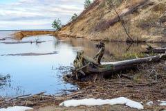 Baltic sea dirty coastline near Saulkrasti town, Latvia Royalty Free Stock Photo