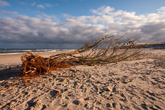 The Baltic Sea Stock Image