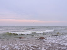 Baltic sea. Flying seagull and Baltic sea waves in colorful sky background, Lithuania Stock Image
