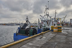 Baltic Sea, freshly caught fish is unloaded from a fishing boa Royalty Free Stock Image