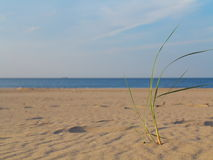Baltic sea grassy sand dunes in the foreground Royalty Free Stock Photography