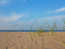 Baltic sea grassy sand dunes in the foreground Royalty Free Stock Image