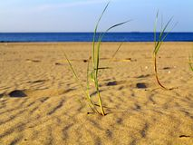 Baltic sea grassy sand dunes in the foreground Stock Photo