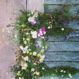 Baltic sea isle flowers Stock Photography