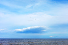 Baltic sea and migratory birds. Royalty Free Stock Photos