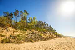 Baltic Sea in Poland with pines and dunes. In back light royalty free stock images