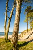 Baltic Sea in Poland with pines and dunes. And blue sky royalty free stock photo