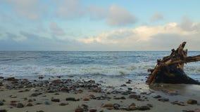 Baltic sea quietly splashing stock video