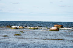 Baltic sea with rocks and green vegetatation Royalty Free Stock Photo