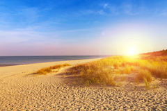 Baltic sea sand dunes Stock Photography