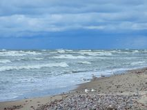 Baltic sea, seagulls  and beautiful cloudy sky, Lithuania Stock Photos