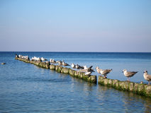 Baltic Sea. Seagulls sitting on the breakwater and the water are viewing Royalty Free Stock Photo