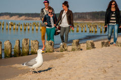 Baltic Sea Royalty Free Stock Photos