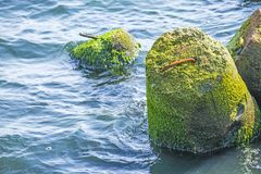 Baltic Sea with wavebreaker Stock Photos