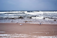 baltic seacoast Obraz Royalty Free