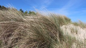 Baltic Seaside With Clump Of Grass. Warm sunshine viewpoint boundary line  between poland And Germany on baltic seaside Usedom Island Royalty Free Stock Photo
