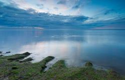 Baltic shore overgrown with algae Royalty Free Stock Photos