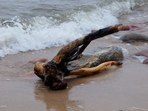 Baltic snag with Rozewie. Royalty Free Stock Image