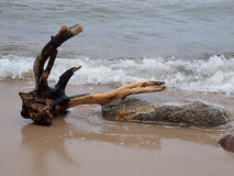 Baltic snag with Rozewie. Stock Image