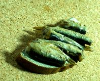 Baltic sprats royalty free stock photography