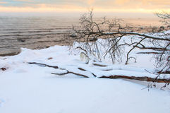 Baltic winter fjord landscape with tree Stock Image