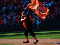 Baltimore Orioles Royalty Free Stock Photos
