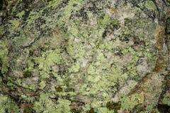 Baltimorensis Flavoparmelia †лишайника Greenshield утеса « Стоковые Изображения RF