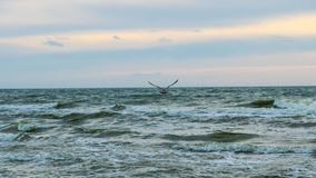 Baltisch strand in palanga Stock Foto