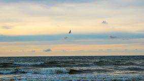 Baltisch strand in palanga Royalty-vrije Stock Foto's